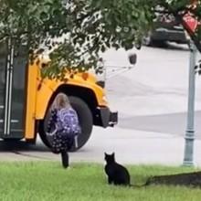 Le bus scolaire arrive devant la maison : son chat a une réaction que personne n'attendait (Vidéo)