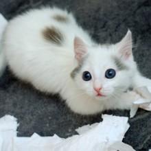 Les 10 chats les plus coupables d'Instagram