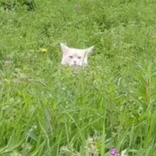 Elle voit un chat dans l'herbe : en s'approchant, elle réalise que ce n'est pas du tout un chat ordinaire