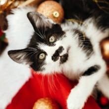 5 idées de cadeaux de Noël qui vont plaire à votre chat