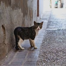 Toutes les 10 et 20 minutes, un chat et un chien se perdent en France