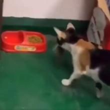 Le chat attrape une souris et l'emmène dans sa gamelle : ce qu'il fait après a interloqué tout le web !