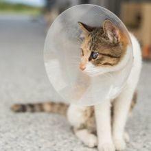 600 refuges et associations ferment leurs portes pour protester les abandons massifs de chats en France