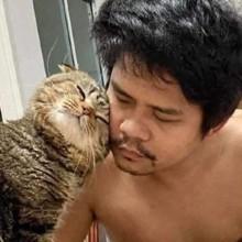 Une femme partage 30 photos qui prouvent que son chat tente de lui voler son mari !