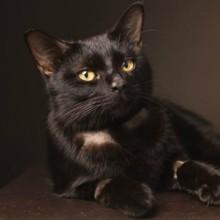 Ce chaton a de la vodka dans le sang, mais il y a une très bonne raison à cela !