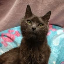Le refuge accueille une chatte : quand ils découvrent son âge, ils ont du mal à y croire