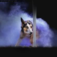 Elle jette de la poudre sur des chiens, le résultat est bluffant (Photos)