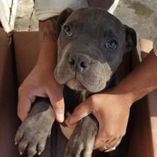Un enfant de 12 ans abandonne un chien devant un refuge : la raison bouleverse tout le pays