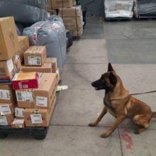 Le policier voit son chien renifler une boite, il l'ouvre et découvre la chose la plus triste au monde