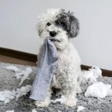 10 photos de chiens qui se sentent vraiment très coupables
