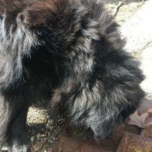 En pleine promenade, son chien refuse de bouger quand elle comprend pourquoi elle appelle à l'aide