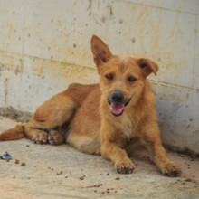 Les gendarmes ramènent un chien perdu chez son maître et font une découverte qui l'envoie direct en prison