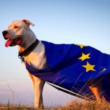Laurent Baffie, candidat du Parti animaliste, se présente aux élections européennes 2019