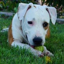 5 mauvaises habitudes qui réduisent l'espérance de vie de votre chien