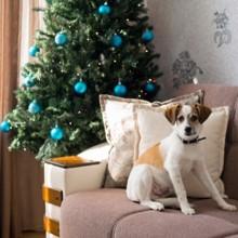 5 idées de cadeaux de Noël pour votre chien !
