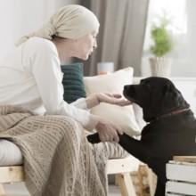 Comment les chiens sentent qu'on est malade ?