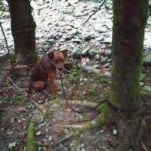 Leur promenade dans les bois vire au cauchemar quand ils découvrent une forme allongée au pied d'un arbre