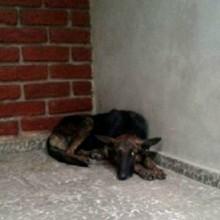Ils aident une chienne errante, quelques jours plus tard ils ont une énorme surprise devant leur porte