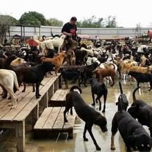 Cette famille a tout sacrifié pour sauver 3000 chiens