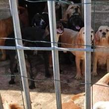 40 chiens en souffrance : l'association n'est pas autorisée à intervenir pour une raison qui choque tout le monde