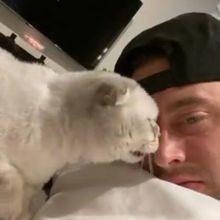 Ce chat lèche le nez de son maître, mais a une réaction hilarante quand on lui rend la pareille (Vidéo)