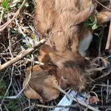 Horrible découverte sur un terrain : la bénévole est furieuse en voyant ce qui bouge dans les feuilles mortes