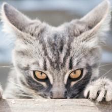 Selon la science, si vous trouvez les chats asociaux, il est probable que vous soyez vous-même bien chiant