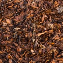 Chat caché dans les feuilles mortes : pouvez-vous le retrouver ?