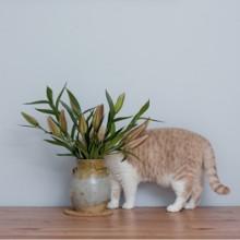 Le chat et la fleur de Lys de Pâques : un mélange toxique à éviter à tout prix !
