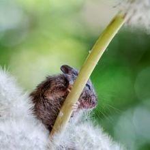 Cette photographe capture la vie d'une souris qui a failli se faire dévorer par un chat