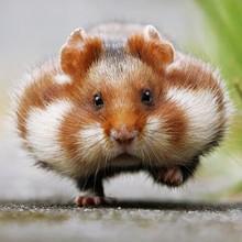 Ecureuils, hamsters et renards partagent leur quotidien dans ces magnifiques photos