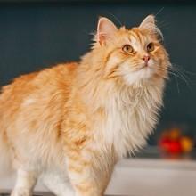 Les lecteurs de Wamiz ont testé la pâté Gourmet Nature's Creations : « Mon chat en redemande ! »