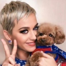 Katy Perry choque ses fans en faisant une annonce fracassante au sujet de son chien