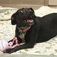 La chienne va chez le vétérinaire pour une radio, tout le monde est bouche bée face aux résultats