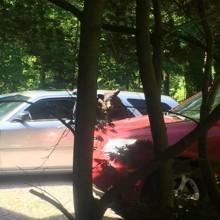 Interloqué, il croit voir un chien au volant de sa voiture et reste figé en comprenant son erreur