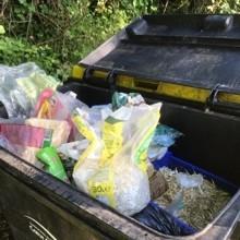 Un paysagiste trouve un lapin dans sa poubelle : il a une mauvaise intuition et découvre le pire un peu plus loin