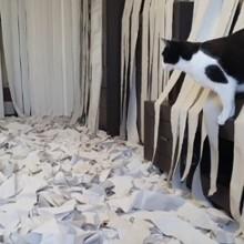 Ce chat est devenu totalement fou dans une pièce remplie de papier toilette, la vidéo fait le buzz
