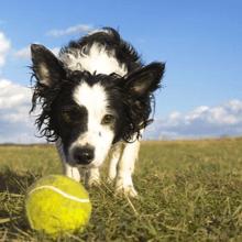 Stupeur chez les propriétaires de chiens britanniques après une terrifiante découverte dans un parc