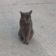Son chat rentre avec un drôle de collier : elle regarde de plus près et écarquille les yeux de surprise