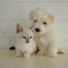 L'Assemblée vote l'interdiction de la vente de chiens et de chats en animalerie