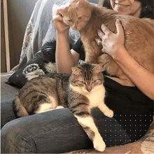 Après 3 ans passés seuls dans un sous-sol, ces chats ont trouvé un foyer chaleureux et aimant