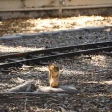 Elle aperçoit des bébés écureuils sur une voie ferrée, s'approche et découvre l'inimaginable