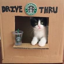 Cette bénévole utilise Instagram afin de faire adopter les chats abandonnés qu'elle recueille