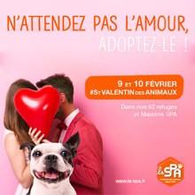 Le Saint Valentin des Animaux de la SPA va avoir lieu le 9 et 10 février 2019