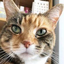 10 photos de chats torbie trop mignons