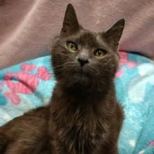 Chat abandonné dans un refuge : le vétérinaire lit sa puce et découvre son incroyable secret