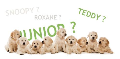 Choisir un nom pour son chien