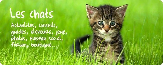 Tout sur les chats