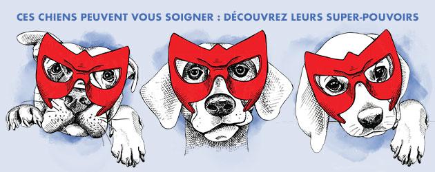 Dossier chiens soigneurs