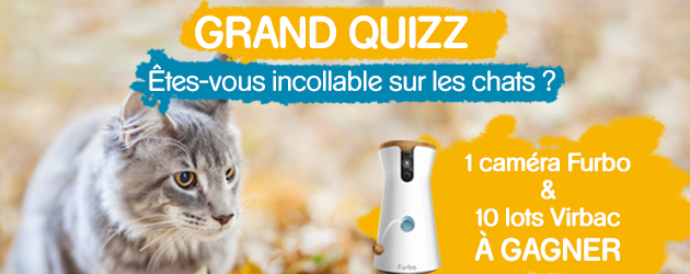 Concours Quizz Chat Virbac